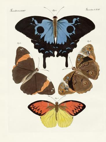 Beautiful Foreign Butterflies Giclée-Druck