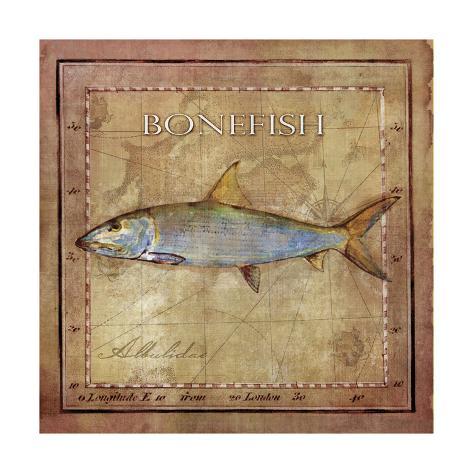 Ocean Fish IV Kunstdruck