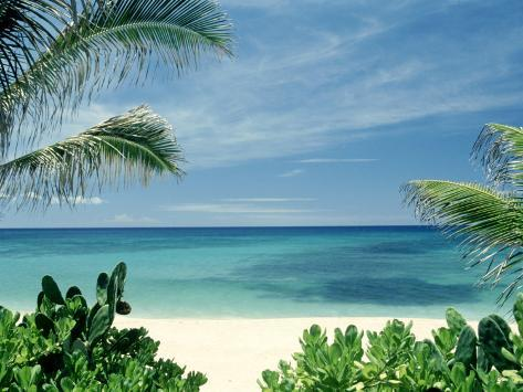 Beach and Palm Trees, Oahu, HI Fotografie-Druck