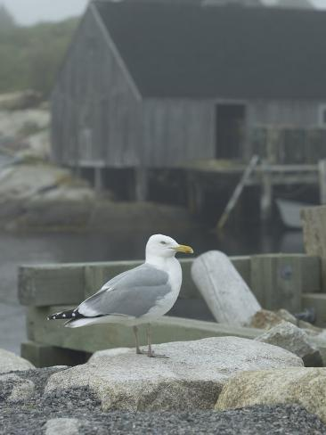 Bird on Foggy Pier Near House in Harbor Fotografie-Druck