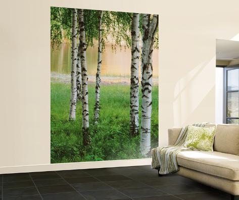 Birkenwald fototapete wandgem lde bei - Birkenwald fototapete ...
