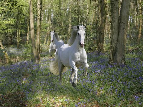 Blue Bell Wood Fotografie-Druck
