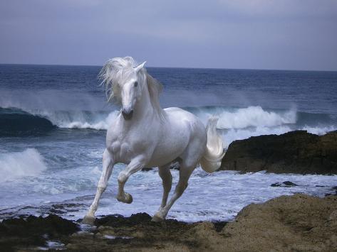 Cyprus Sea Fotografie-Druck