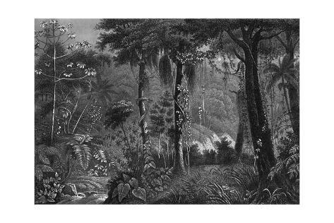 Brazilian Rainforest Giclée-Druck
