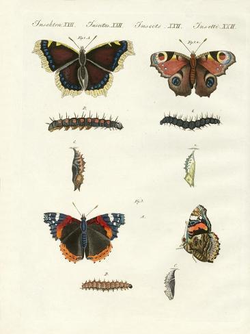Butterflies -- Birds of Day Giclée-Druck