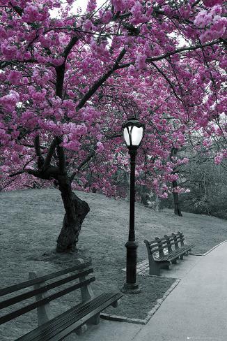 Central Park - Blüten Poster