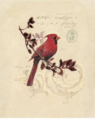 Filigree Cardinal Kunstdruck