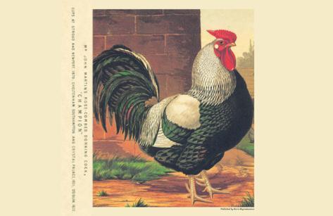 Champion Rose Combed Dorking Cock Kunstdruck
