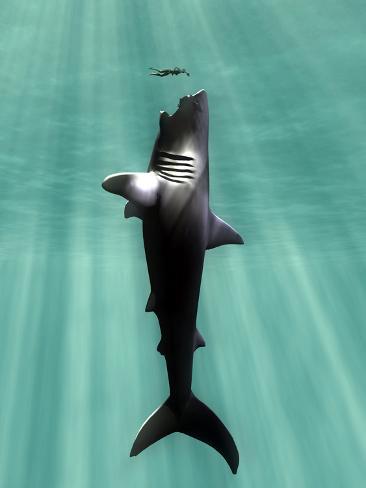 Megalodon Prehistoric Shark with Human Fotografie-Druck