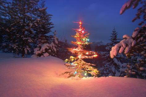Christmas Tree In Snow With Lights Fotoprint Bij Allpostersnl