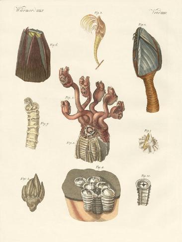 Cirrhipodas, Bristleworms or Brachiopods Giclée-Druck