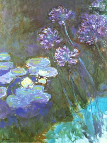 Water Lilies and Agapanthus Kunstdruk