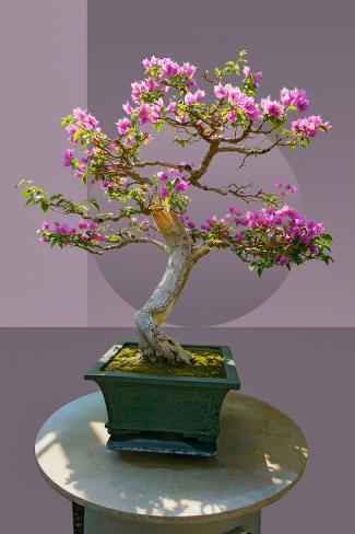 Composite image of Japanese bonsai tree in front of a geometric Asian pattern Fotografie-Druck