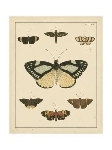 Heirloom Butterflies II Kunstdruck