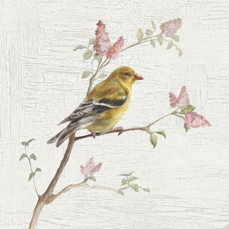 Female Goldfinch Vintage Kunstdruck