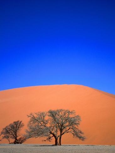 Tree and Sand Dune, Namib Desert Park, Namibia Fotografie-Druck