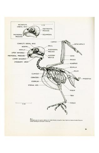 Descriptive Parts of a Parrot no. 24 Kunstdruck