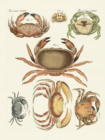 Different Kinds of Crabs Giclée-Druck