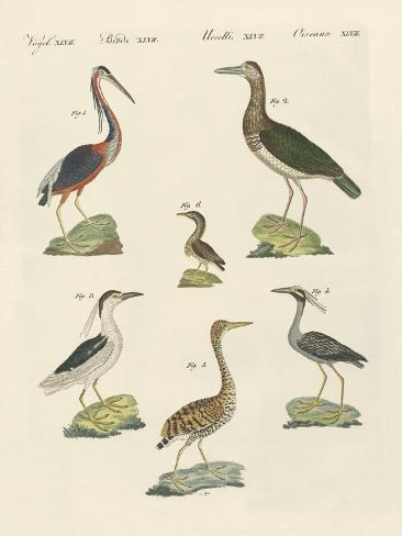 Different Kinds of Herons Giclée-Druck