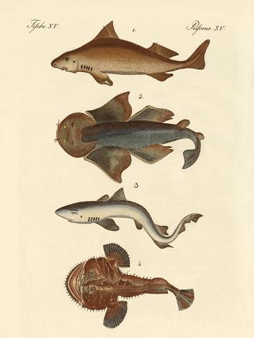 Different Kinds of Sharks Giclée-Druck