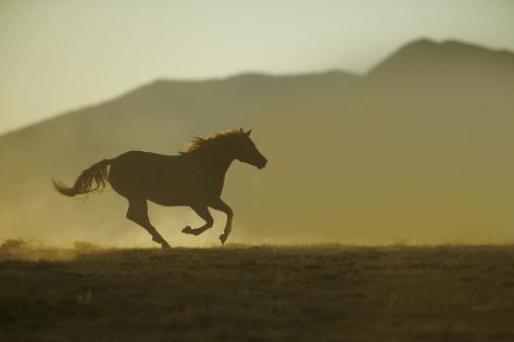 Galoppierendes Pferd Fotografie-Druck