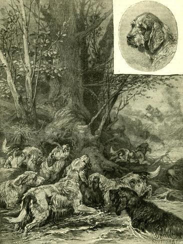 Dogs Hunting Austria 1891 Giclée-Druck