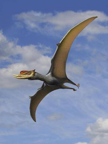 Dsungaripterus Weii, a Pterosaur That from the Early Cretaceous Period Kunstdruck