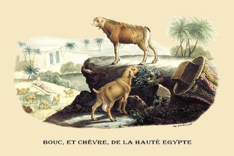 Bouc et Chevre de la Haute Egypte Wandtattoo