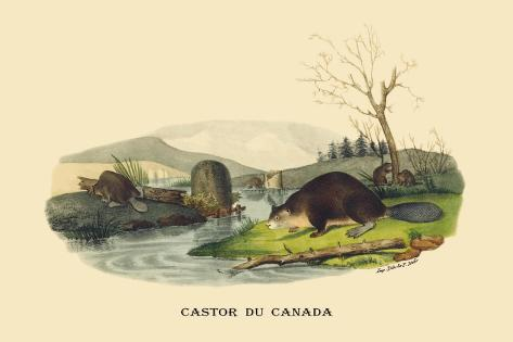 Castor du Canada Wandtattoo