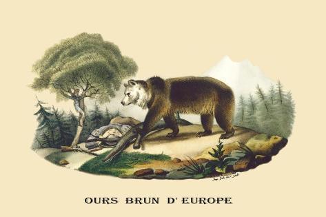 Ours Brun d'Europe Wandtattoo