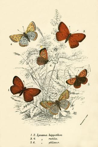 Schmetterlinge Giclée-Druck