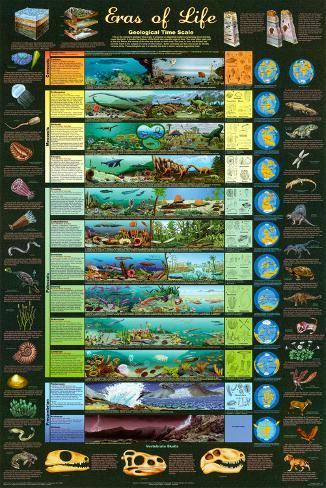 Eras of Life Geology Educational Science Chart Poster Poster
