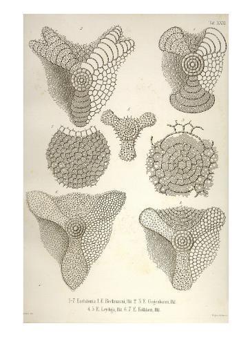Collection of Euchitonia Kunstdruck