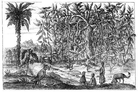 Fig Trees, 19th Century Giclée-Druck