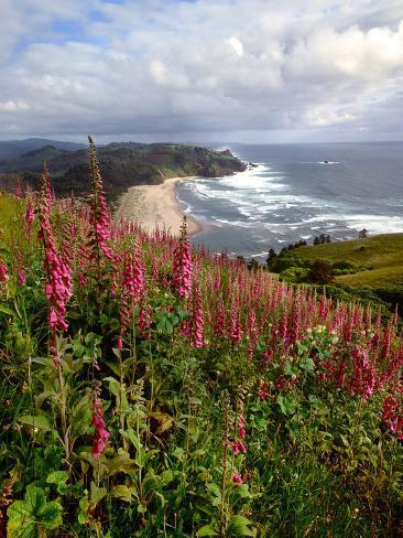 Foxgloves at Cascade Head, The Nature Conservancy, Tillamook County, Oregon, USA Fotografie-Druck