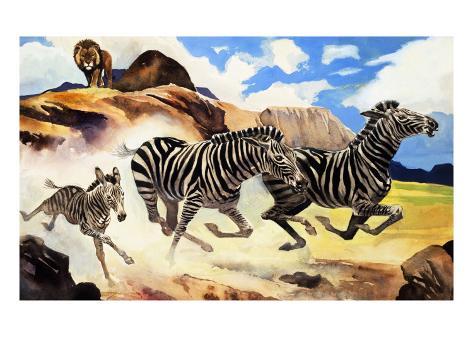 Lion Hunting Zebras Giclée-Druck