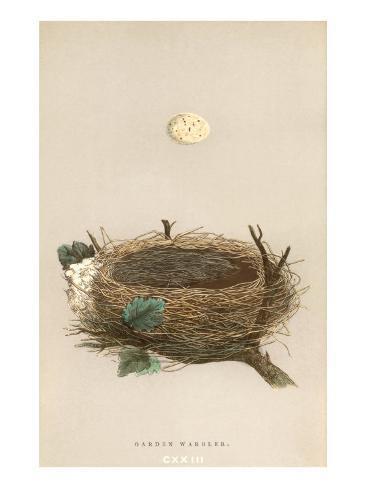 garden warbler egg and nest poster bei. Black Bedroom Furniture Sets. Home Design Ideas