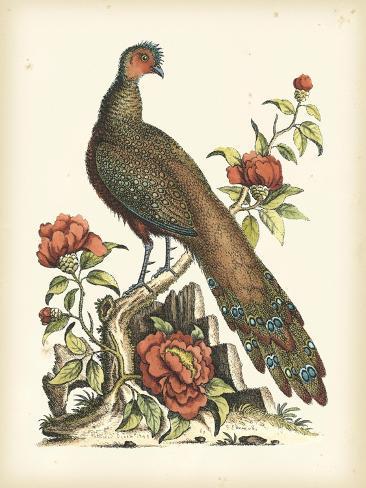 Regal Pheasants III Kunstdruck