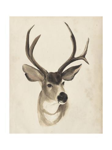 Watercolor Animal Study II Giclée-Premiumdruck