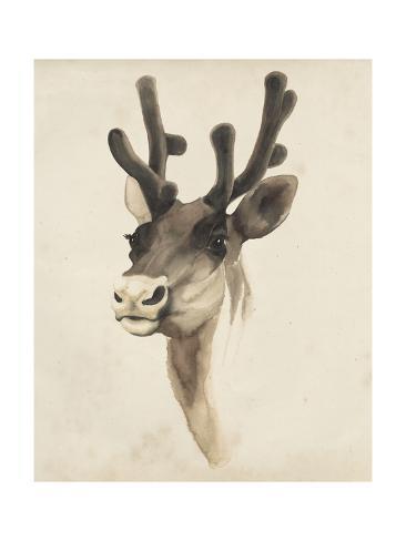 Watercolor Animal Study III Giclée-Premiumdruck
