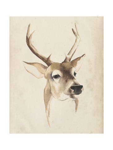 Watercolor Animal Study IV Kunstdruck