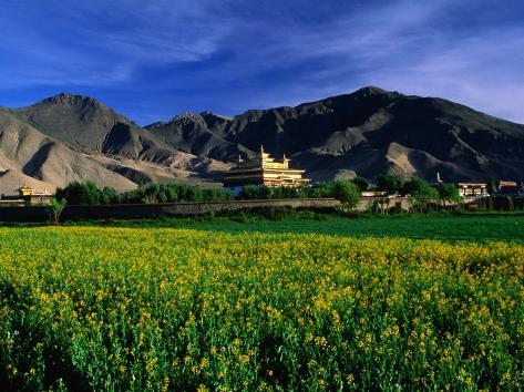 Samye Monastery Across Field, Samye Monastery, Tibet Fotografie-Druck