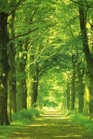 Waldweg Poster