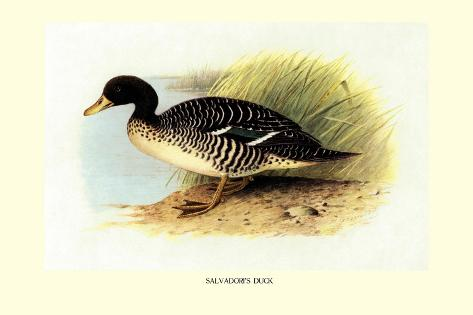 Salvadori's Duck Wandtattoo