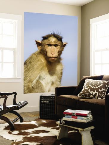 Bonnet Macaque, Badami Caves Fototapete