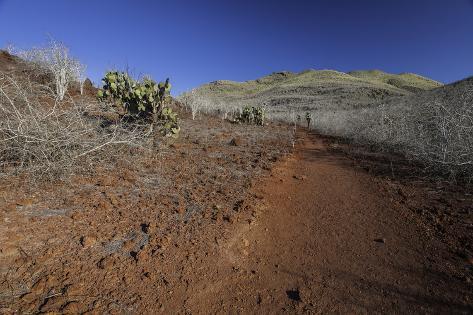 Hiking Trail on Rabida Island Fotografie-Druck