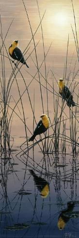 Morning Call - Yellow Headed Blackbirds Giclée-Druck