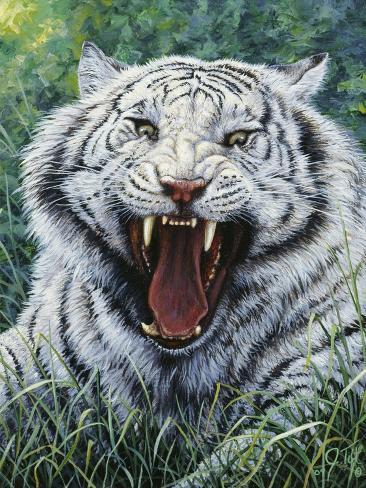 White Tiger 2 Giclée-Druck