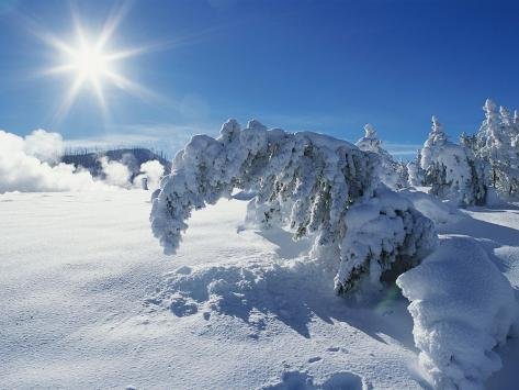 Snow on Trees at Lower Geyser Basin Fotografie-Druck