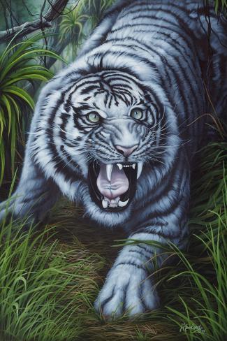 Weißer Tiger Giclée-Druck